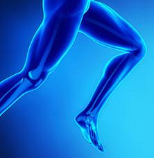 human legs bones